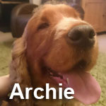 ArchieGN1