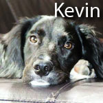 kevin3